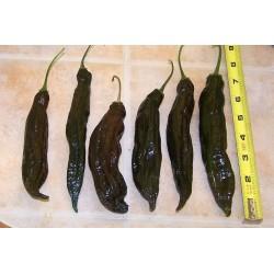 Ají Panca Peruvian Chili Seeds (Capsicum baccatum) 1.65 - 2