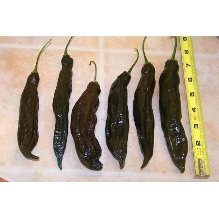 Graines de piment péruvien Ají Panca (Capsicum baccatum) 1.65 - 2