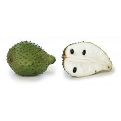 Semillas de Guanábana (Annona muricata) 2.049999 - 4