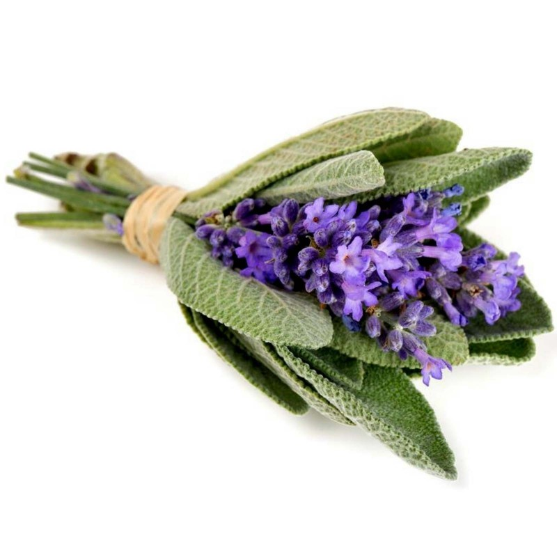 Semillas de Salvia officinalis 1.95 - 4