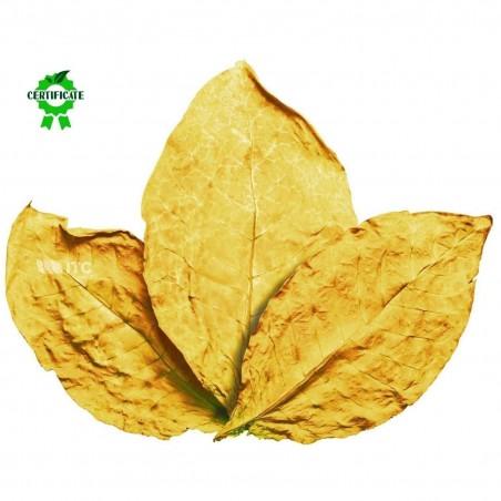 Virginia Gold Tobacco Seeds 1.75 - 2