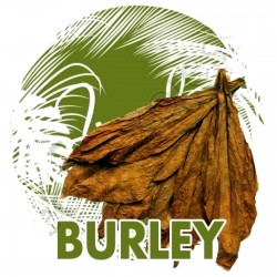 Semillas de Tabaco Burley...