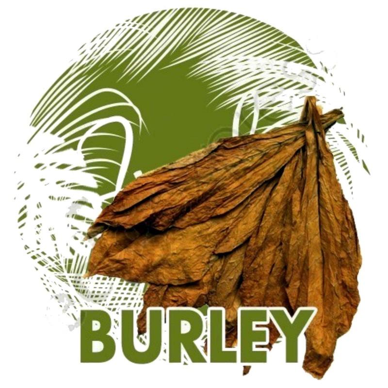 Semi di Tabacco Burley aroma di cacao 1.95 - 1