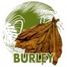 Sementes Burley Tobaco cacau como aroma
