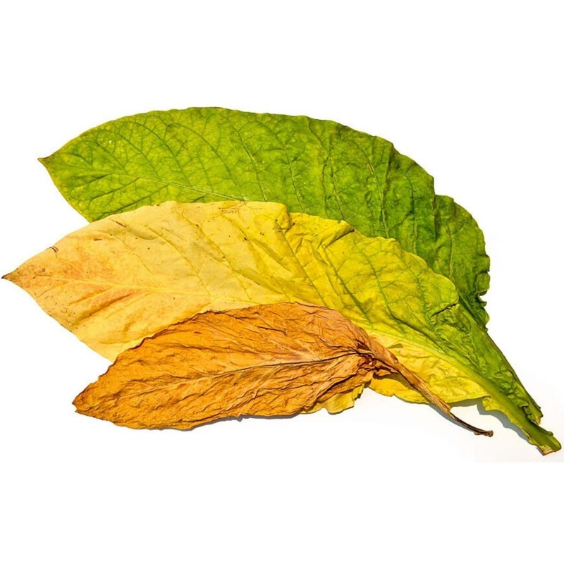 Samsoun Orient Tobacco Seeds 1.75 - 1