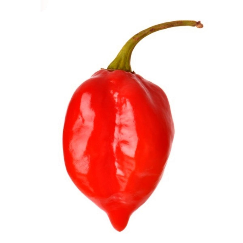Habanero Savina Red Seeds 2.45 - 5
