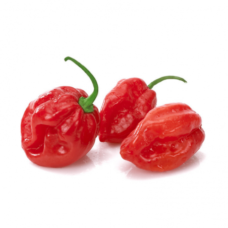 Habanero Savina Red Seeds 2.45 - 3