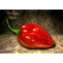 Semillas de Tomate Negro - Black Krim