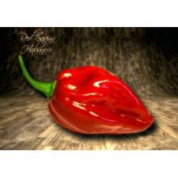 Habanero Savina Red Seme ekstremno ljut 2.45 - 4