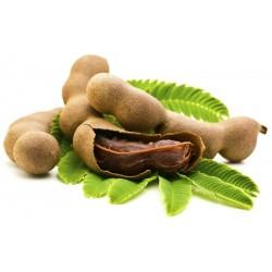 Tamarind Seeds (Tamarindus indica) 2.2 - 1