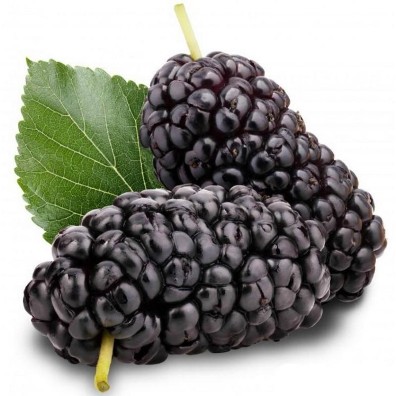 Шелкови́ца чёрная семена (Mórus nígra) 1.95 - 1