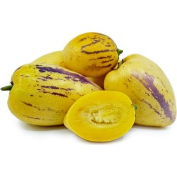 Birnenmelone Pepino Samen...