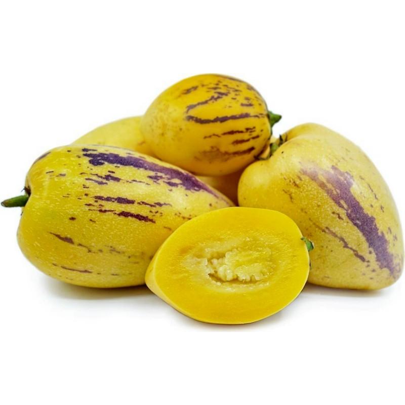 Sementes De Melão-Pêra (Solanum muricatum) 2.55 - 6