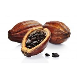 Kakaobaum Samen (Theobroma cacao) 4 - 8