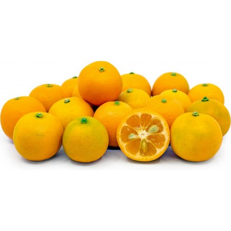Graines de Calamondin(Citrofortunella microcarpa) 2.65 - 7