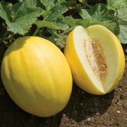 Σπόροι Πεπόνι κίτρινο 1.95 - 2