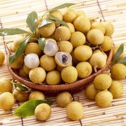 Σπόροι ευφορία λυκείο (Dimocarpus longan) 3.5 - 2