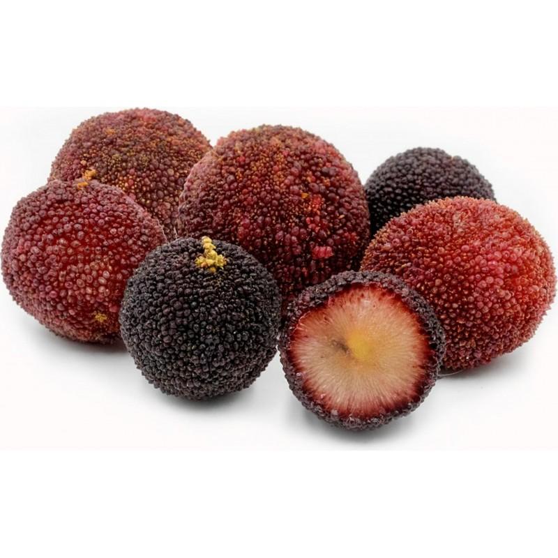 Pappelpflaume Samen chin. Erdbeere (Myrica rubra) 3.5 - 5