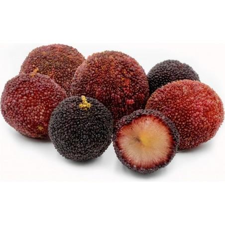 Mountain Peach Seeds (Myrica Rubra) 3.5 - 5