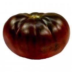 Semi di Pomodoro nero...