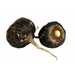Black Maca Organic Seeds...