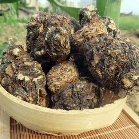 Black Maca Organic Seeds (Lepidium meyenii) Aphrodisiac 2.049999 - 3