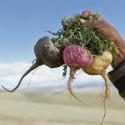 Semillas de Madan - garcinia schomburgkiana- muy raras