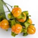Garcinia schomburgkiana - Madan - Samen - sehr selten