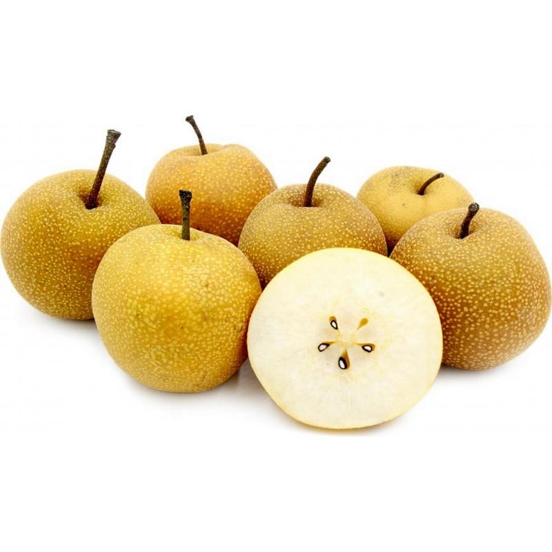Σπόροι ασιατικό αχλάδι (Pyrus pyrifolia) 3 - 1