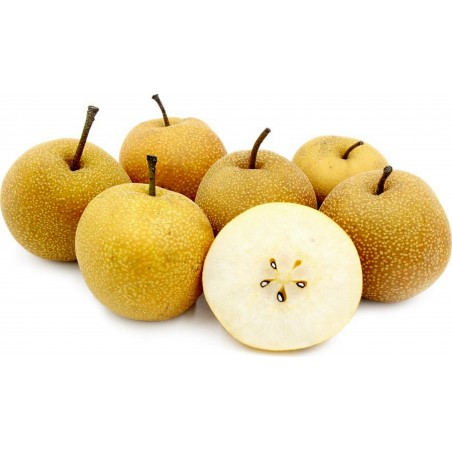 Asian Pear Seeds - Chinese Sand Pear (Pyrus pyrifolia)