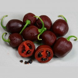 """Rocoto Manzano Brown"" Chili - Cili Seme - Chili Inka 2.5 - 1"