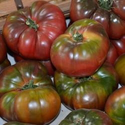 Semillas de Tomate Negro - Black Krim 1.85 - 3