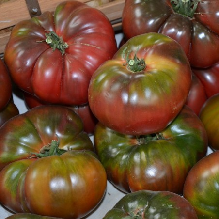 Black Krim Tomato Seeds 1.85 - 3