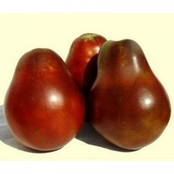 Black Truffle Tomato Seeds