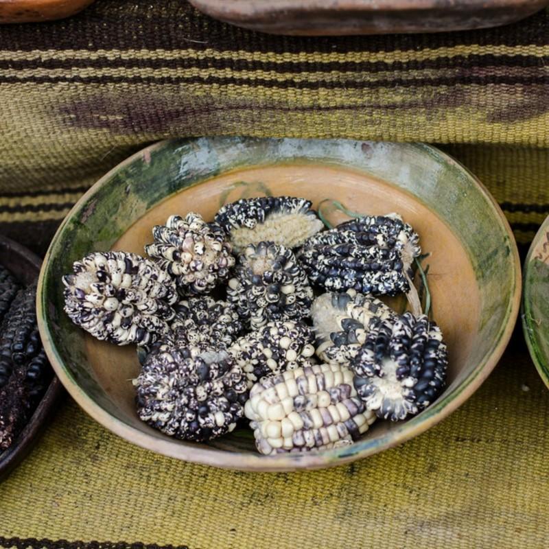 Röstmais - Mais der Anden Schwarz-Weiss Chulpe Samen 2.45 - 1