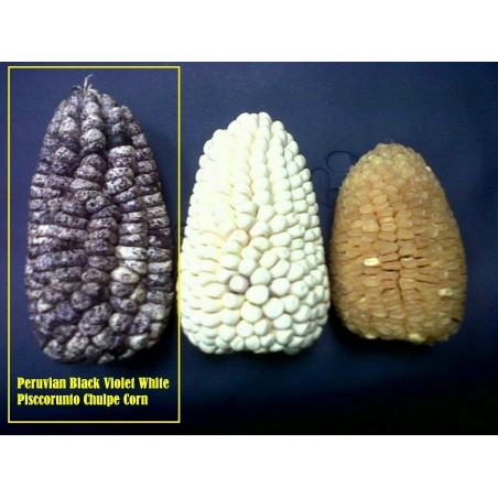 """Semillas de maíz peruano Negro violeta blanco """"K'uyu Chuspi"""" 2.45 - 7"""