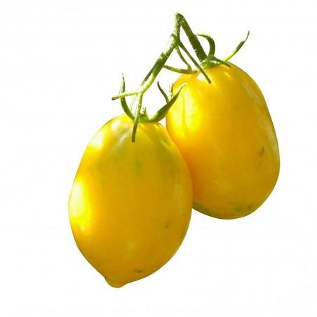 Lemon Plum Tomato Seeds
