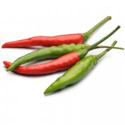 Sementes de Pimentão Rawit Vermelho (Capsicum frutescens) 1.95 - 4