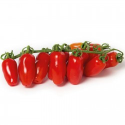 Mini San Marzano Yellow and Red Tomato Seeds 1.95 - 3