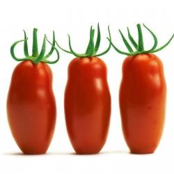 Tomatfrön Mini San Marzano Gult och Rött 1.95 - 6