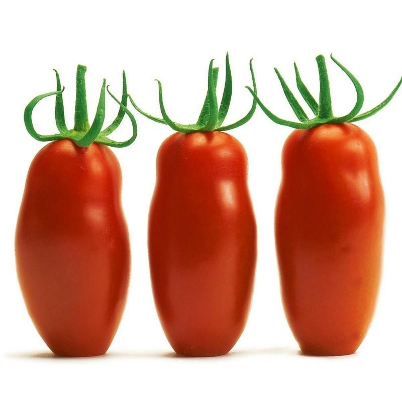Semillas de tomate Mini San Marzano Amarillo y rojo 1.95 - 6