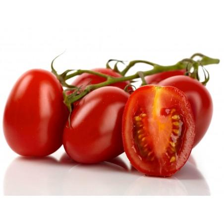 "Graines de Tomate Cherry Plum ""UNO"" 1.95 - 3"