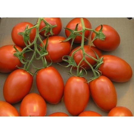 """Tomato Seeds Cherry Plum """"UNO"""" 1.95 - 2"""