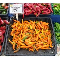 Bulgarian Carrot - Chilifrö 1.8 - 5