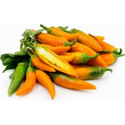 Bulgarian Carrot Chili Pepper Seeds 1.8 - 1