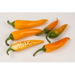 Bulgarian Carrot Chili Pepper Seeds 1.8 - 6