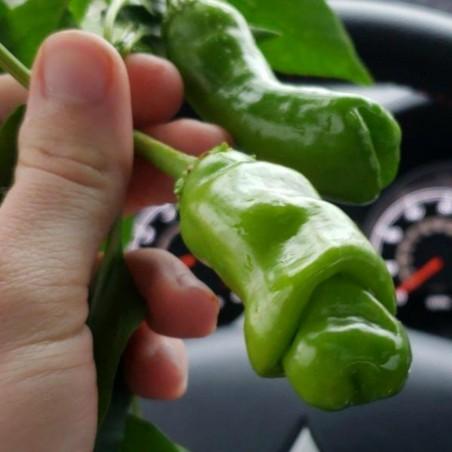 Σπόροι Τσίλι - πιπέρι Penis Chili (Peter Pepper) 3 - 2