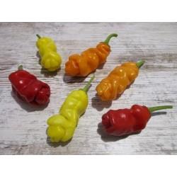Graines de Piment Penis - Penis Chili 3 - 5
