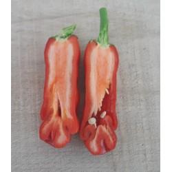Semillas de Pimiento Penis Chili - Erotico Rojo 3 - 10
