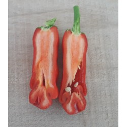 Graines de Piment Penis - Penis Chili 3 - 10